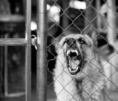 How to train a dog with aggression