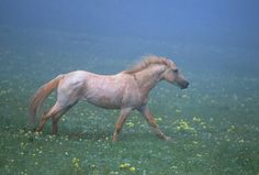 """""""Horses are creatures who worship the earth as they gallop on feet of ivory. Constrained by the wonder of dying and birth, the horses still run, they are free."""" ~John Denver and Joe Henry"""