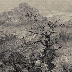 Orchestration, North Rim, Grand Canyon - Thomas Myers