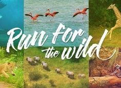 On Saturday April 29 The Bronx Zoo will be hosting their Run for the Wild 5K & Family Fun Run. THE ARENA will be on hand giving away free massages & stretching all runners post-race! Other activities that day will include rock climbing beer garden music face painting and much more! There will also be free general admission to the zoo for all participants & their families! The festivities kick off at 7 am with the actual run set to begin at 8 am.  Register today & join us for a day filled…