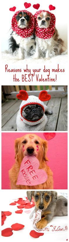 The doggone truth is that dogs make the best valentines! Happy Valentines Day to all those spoilt pups!
