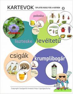 INFOGRAFIKÁK - gazigazito.hu Herbs, Plants, Gardening, Room, Bedroom, Lawn And Garden, Herb, Rooms, Plant
