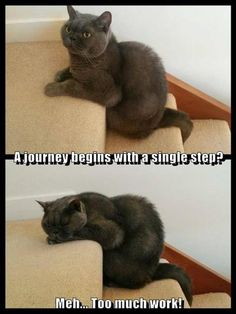This is  like my cat