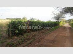 Finca en Venta - Otros municipios san luis tolima vereda piedra blanca