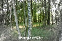 In het bos, zwart/wit foto met een kleur accent.  https://fotografiesybrandy.luondo.nl
