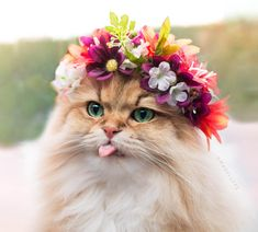 Pretty floof - your daily dose of funny cats - cute kittens - pet memes - pets in clothes - kitty breeds - sweet animal pictures - perfect photos for cat moms Cute Cats And Kittens, Baby Cats, I Love Cats, Cool Cats, Kittens Cutest, Pretty Cats, Beautiful Cats, Animals Beautiful, Cute Baby Animals