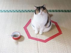 Cat in a tape circle.