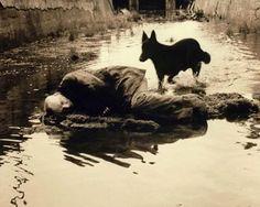 Andrei Tarkovsky / Stalker