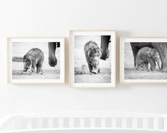 Baby Elephant Photography Print Set of Three Nursery Room Decor, Black and White Baby Animal Print Sets, Wildlife Poster Kids Room Pictures – EtsyUK - Baby Animals Baby Elephant Nursery, Elephant Wall Art, Elephant Print, Elephant Elephant, Animal Nursery, Nursery Room Decor, Nursery Wall Art, Wall Art Decor, Elephant Photography