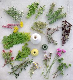 Plants fo Miniature Flower Arranging, by Janit Calvo.