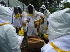 Gobernación entregó equipos de protección a apicultores de La Celia