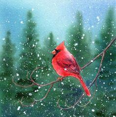 CARDINAL 3 watercolor bird painting, painting by artist Barbara Fox