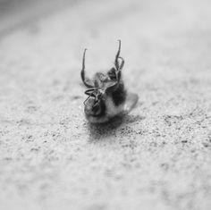 not to bee. seattle, washington