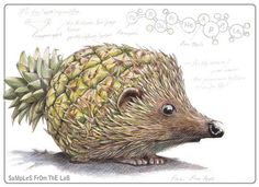 The Porcupineapple Another one of South African illustrator Rob Foote's awesome illustrations for his colour pencil series entitled: SaMpLeS...