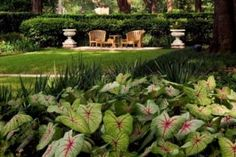 Design and installation are the first steps in your landscape design. Then comes the week-in, week-out care and consideration of the landscape. Houston lawn service is a year-round affair which requires attention to maintain the overall design intent, plus some particular tasks caused by our climate and environment.