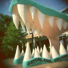 gatorland, orlando, florida • lauren mitchell