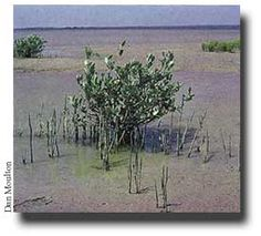 Mangrove Sundarbans Rampal Analysis (3)