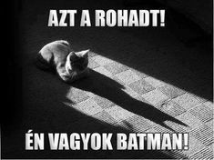 Stupid Funny Memes, Funny Fails, Everything Funny, Funny Animals, Haha, Grumpy Cat, Funny Pictures, Love You, Batman