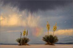 Yuccas, Rainbow and Virga