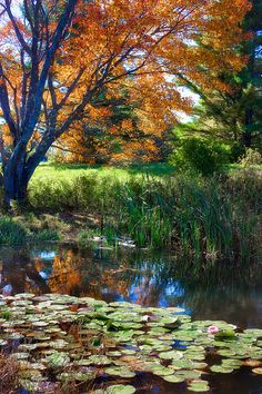 ✯ By The Pond