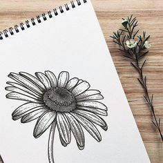 Have you ever wanted to search for the tiniest details on a simple daisy? I must say, the central part is pretty ful of little particles. ☺ They are standing next to each other forming a spectacular spiral structure. Cool Art Drawings, Pencil Art Drawings, Art Drawings Sketches, Doodle Drawings, Doodle Art, Art Floral, Daisy Drawing, Floral Drawing, Drawing Flowers
