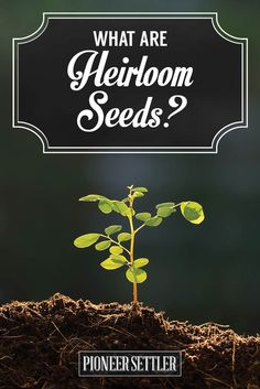 What Are Heirloom Seeds? | Homesteading Gardening Tips and Ideas by Pioneer Settler http://pioneersettler.com/what-are-heirloom-seeds