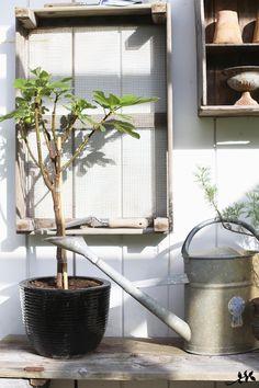 Keittiöpuutarhassa kaikki hyvin! Onneksi tämä osa puutarhaa ei ota nokkiinsa, vaikka siellä ei paljoa hommia tekisikään. Olen säästellyt...