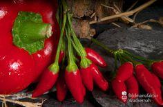 awesome Fotografie »Peperoni – Kulinarische Streifzüge Numero 36«,  #Food #Stills