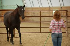 horse in round pen during equine assisted therapy