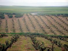 plantaciones-de-olivar-cbh-16