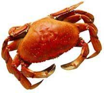 El chistosán es una fibra que no puede ser absorbida por el organismo humano y que tiene su origen en el caparazón de ciertos crustáceos como el cangrejo.  Entonces cuando tomas esta fibra llamada chistosán, al momento en que llega al intestino, captura las grasas de tú dieta impidiendo la absorción de las mismas, capturando de 5 a 10 veces el peso en grasas, de manera que esta grasa no se absorbe y sí se elimina como producto de desecho intestinal.