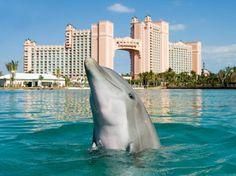 Atlantis, Dolphin Cay, Bahamas