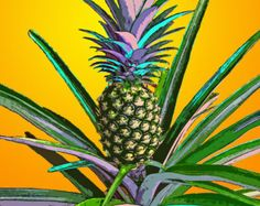 Fine art print - Pineapple plant - Vero Beach, Florida
