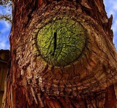 This tree is watching you!