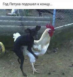 Check out: Animal Memes - Chicken tacos. One of our funny daily memes selection. We add new funny memes everyday! Bookmark us today and enjoy some slapstick entertainment! Funny Meme Pictures, Funny Animal Pictures, Funny Images, Funny Animals, Humor Facebook, Lol, I Love To Laugh, Twisted Humor, Adult Humor
