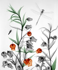 X-ray radiography of Nature, by Arie van 't Riet (x-rays.nl)