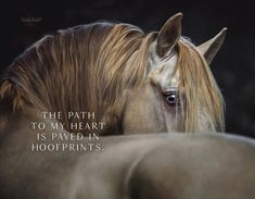 Horse Riding Pants, Trail Riding Horses, Horse Riding Quotes, Horse Riding Tips, Horseback Riding Outfits, Horseback Riding Lessons, Inspirational Horse Quotes, Best Qoutes, Equestrian Quotes