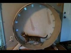 Home Made Cat Wheel (with link to building instructions) - YouTube