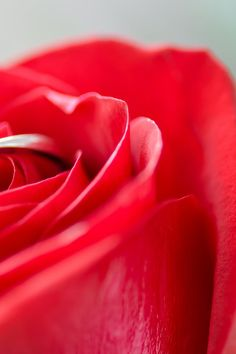 Closeup Photography of Clear Jeweled Gold-colored Cluster Ring on Red Rose · Free Stock Photo