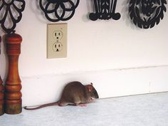 Pests That Could Invade Your Home