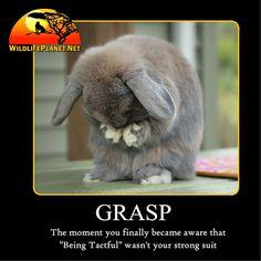 Dec 8, 2016 Funny Animal Caption Photo Of The Day - Wildlife Planet