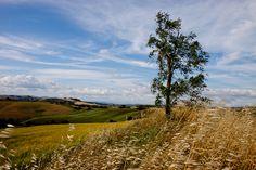Campos ao vento na região da Toscana, Itália.  Fotografia: efilpera no Flickr.