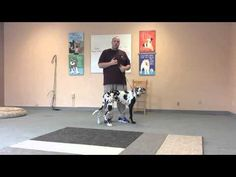 How to Use Electronic Dog Training Collars - MyPetLov.com