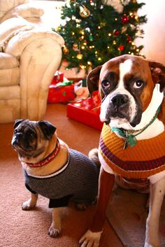 26 Pictures Of Cats & Dogs In Christmas Sweaters