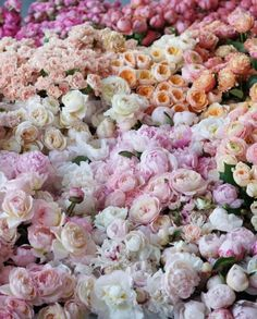 Just a few peonies and roses here and there. Peonies, Tulips, Hortensia Rose, Happy Mother S Day, Flower Backgrounds, My Flower, Fairy Lights, Floral Wedding, Make Me Smile