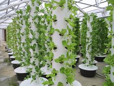 New York City's Most Successful and Longest-Running Hydroponic ...