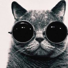 Coolest cat in town
