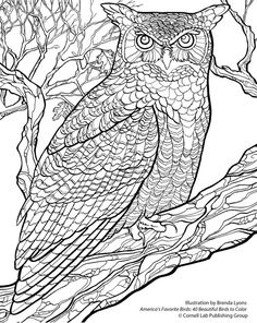 Free Owl Coloring Pages For Adults From Dover Publications See More Ghow Crop Sm