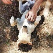 Adozione cani - Birillo e un allegro cagnolino di taglia medio-piccola (pesa 12 kg)