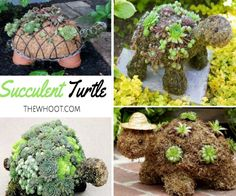 Succulent Turtle Planter
